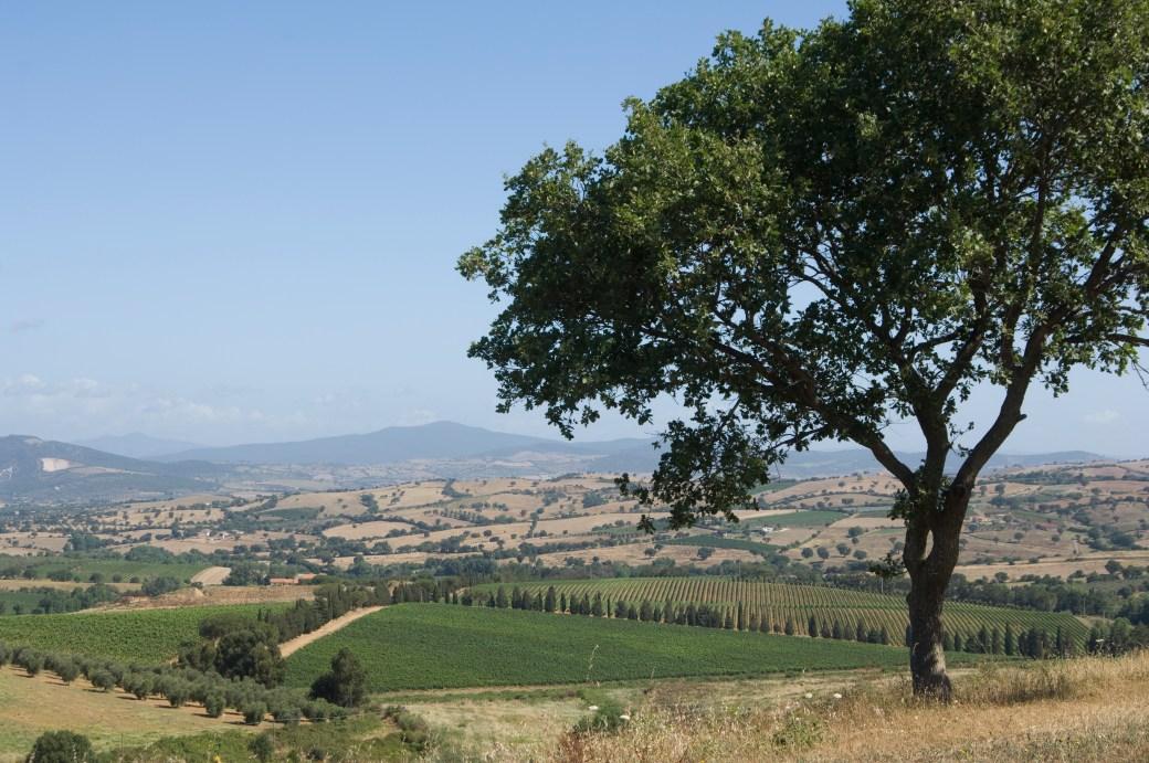 Maremma Countryside