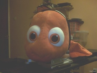 The Much Honoured Nemo of Great Barrier Reef