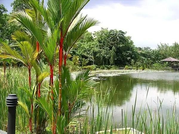 symphony lake botanic gardens singapore Snazzy Trips