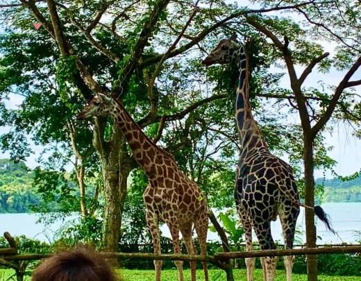 zoo residents