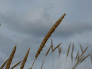schoorl - sky grass 2