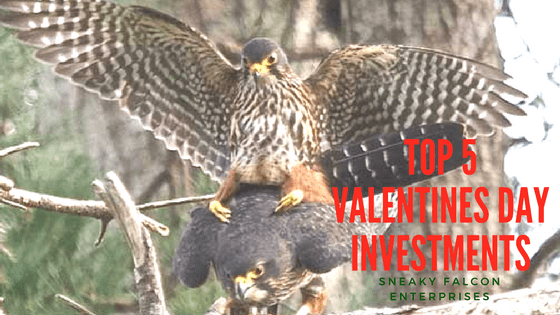 F@#k Flowers; Top 5 Valentines Day Investments for Your S.O.