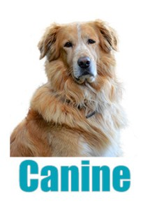Buy canine dog treats online