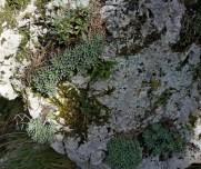 Typisk kalksteins fjellvegg