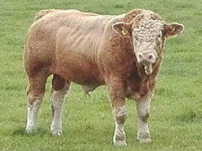 Kilbride Farm Gabriel PP