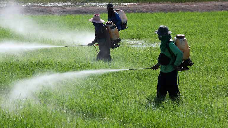 UN Warns Pesticides Cause 200,000 Deaths A Year