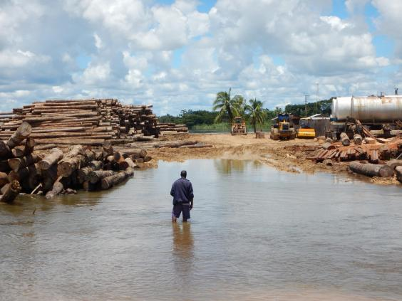 papua-logging-0.jpg
