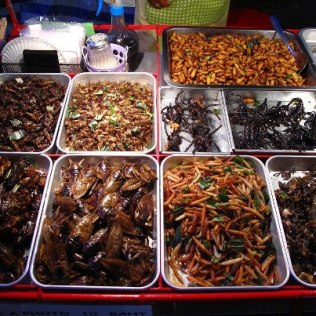 Assortment of grilled scorpions, spiders, cockroaches, larvaes, crickets and other delicacies, Bangkok, Thailand