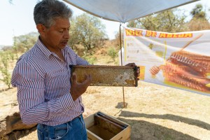 Local Honey Farmers Milpa Alta Mexico