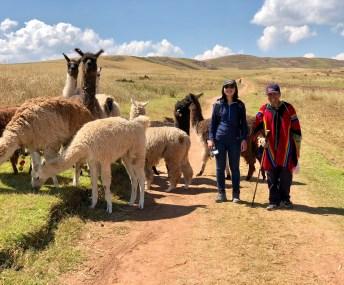 Llama Trekking in Huaypo Lagoon, Urubamba, Sacred Valley, Peru