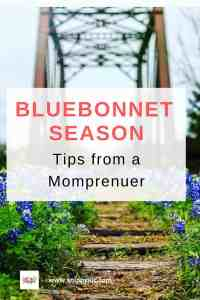 Bluebonnet Season
