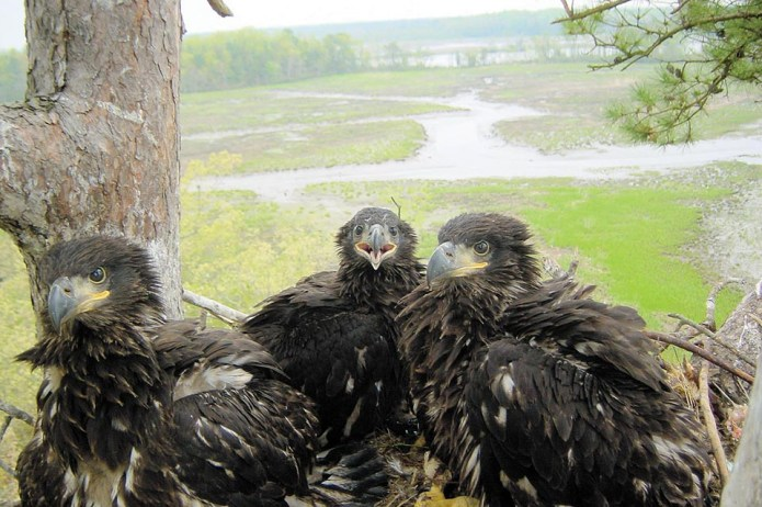 Nature Around Us: Winter Eagle Festival Set for Feb. 1