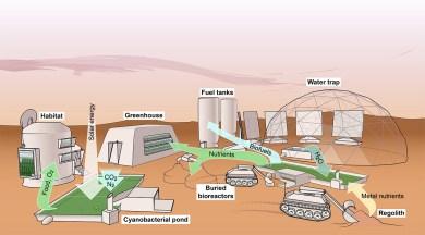 Cyanobacterial life support on Mars. For Verseux et al. (2015), International Journal of Astrobiology 15(1):65-92