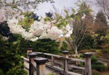 Nishiyama Japanese Garden