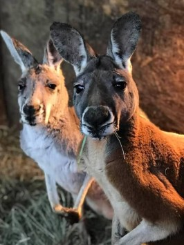 Arlington Outback Kangaroo Farm