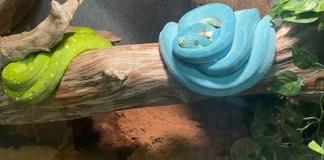 Reptile Zoo Monroe