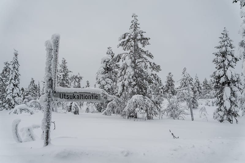 Snow around Levi in Lapland (Finland)