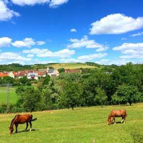 Pferdeidylle in Hohenlohe