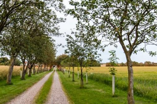 Sonderbygaard in Vinderup