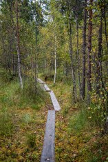 Hiking-Trail Sammalistonpolku in Finnland