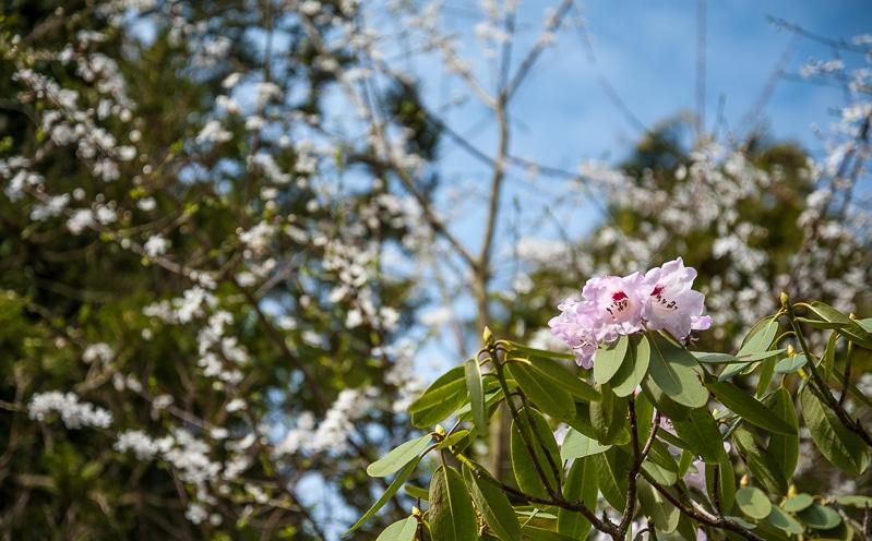 Frühblüher im Rombergpark