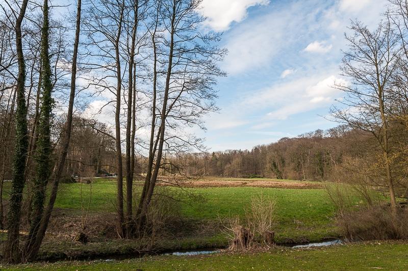 Wiesenlandschaft im Rombergpark mit Schondelle