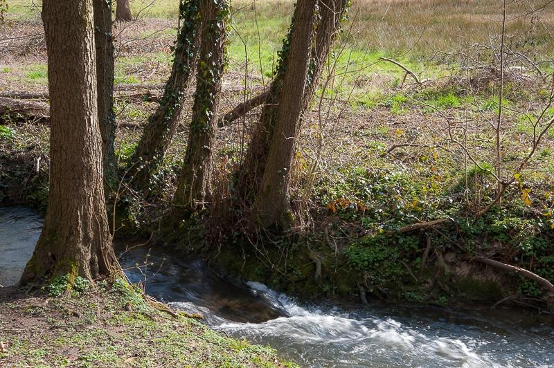 Bachlauf der Schondelle im Rombergpark