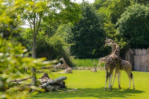 Giraffen in der Kiwara-Savanne Foto: Simon Bierwald (Indeed Photography)
