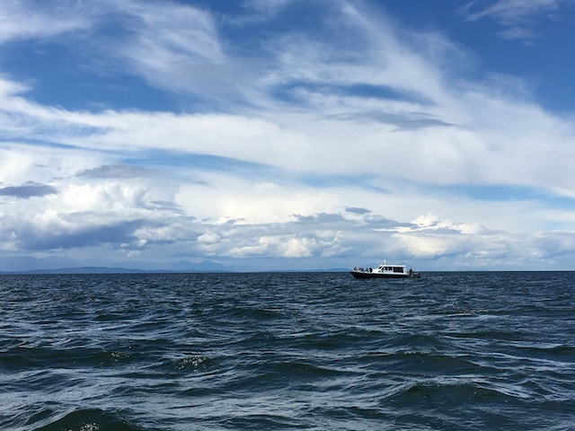 Vor Vancouver - Whale Watching Tour
