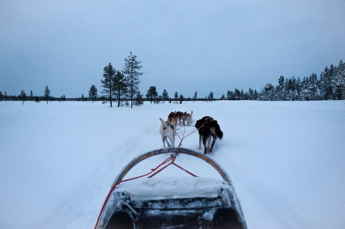 Schlittenhundefahrt zur Blauen Stunde