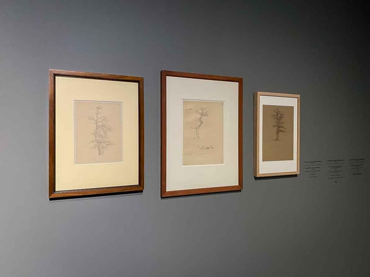Zeichnungen - Studien zu alten und entlaubten Eichen, Caspar David Friedrich