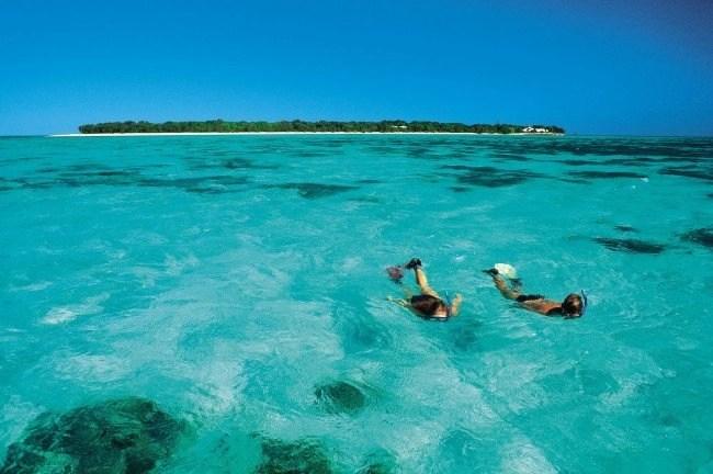Heron-Island-snorkling