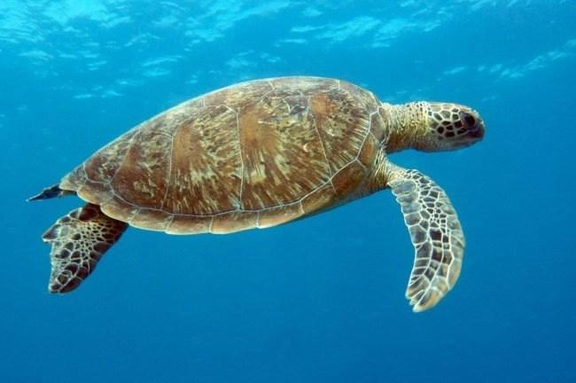 Heron-Island-snorkelling-3