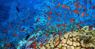 Coral reef Red Sea Hurghada Egypt