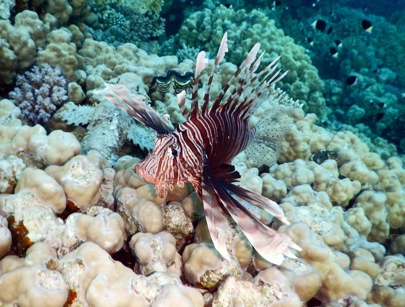 Lionfish Invasion