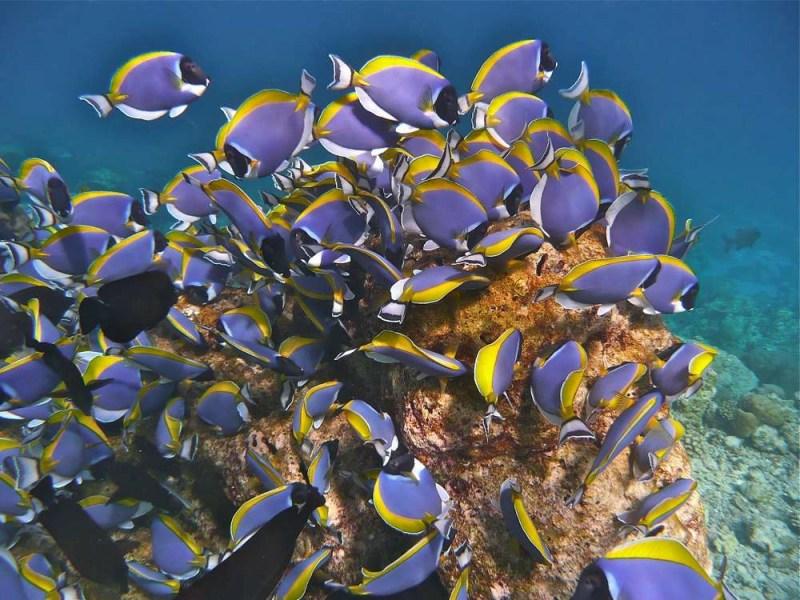 snorkeling-maldives-resorts-baros-island-housereef