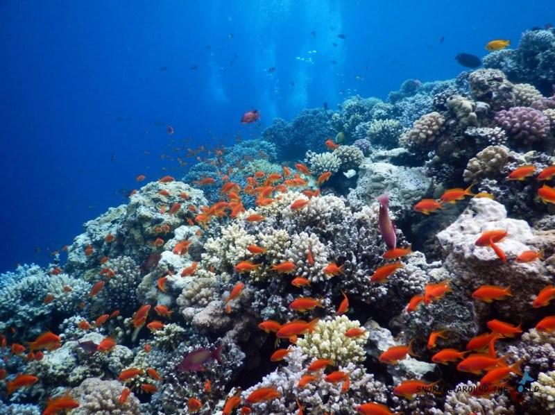 Blue Hole Egypt - Snorkeling