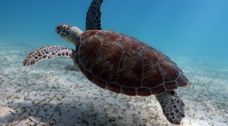 Snorkeling-with-turtles-in-Aruba_index