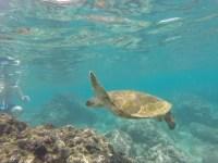taking-photo-underwater-cameras