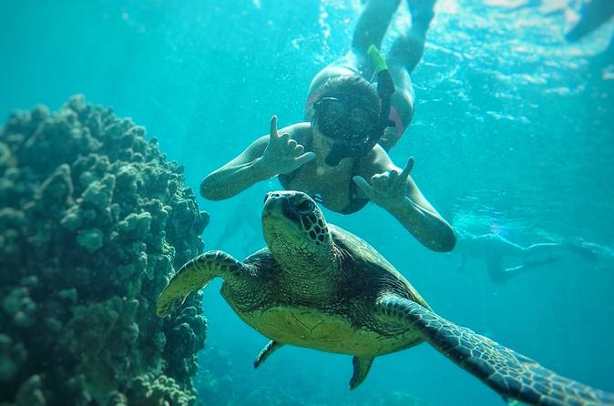 snorkeler throwing shaka with a sea turtle