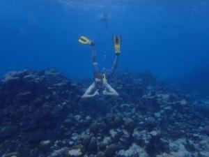 tobago snorkel