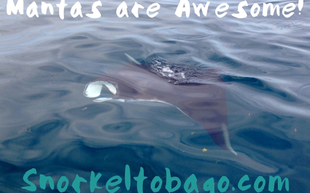 Mantas are Awesome