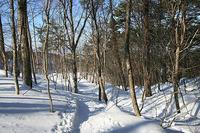 裏磐梯スキー場わきの森