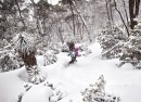 powder riding at Mt Mawson