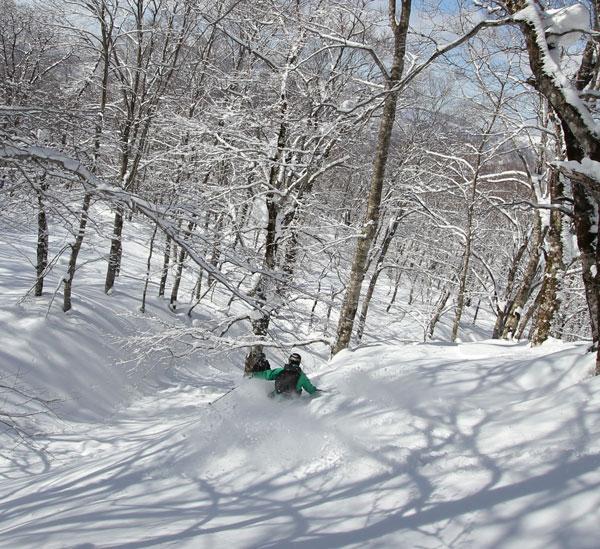 Tree skiing Tazawako CAT Tour
