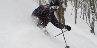 Thigh deep Cortina tree skiing