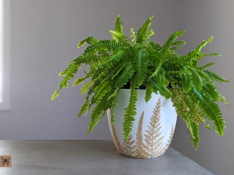 Fern inside decoupage plastic planter