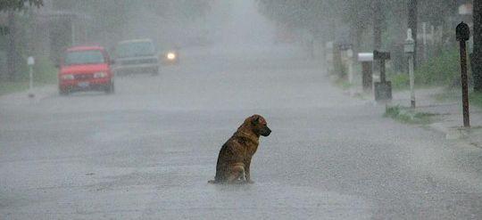 Sad Dog is sad.