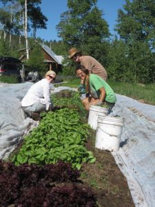 Workshares Melanie and Liz help Shannon with weed patrol