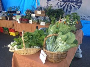 Turnips and Bok Choy at the market